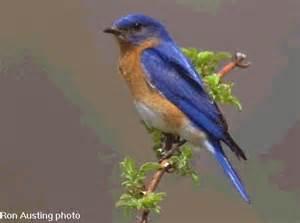 bird new york images