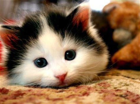 Karpet Anak Lucu gambar kucing lucu dan aneh di karpet pernik dunia