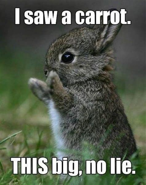 Funny Rabbit Memes - 25 very funny rabbit pictures