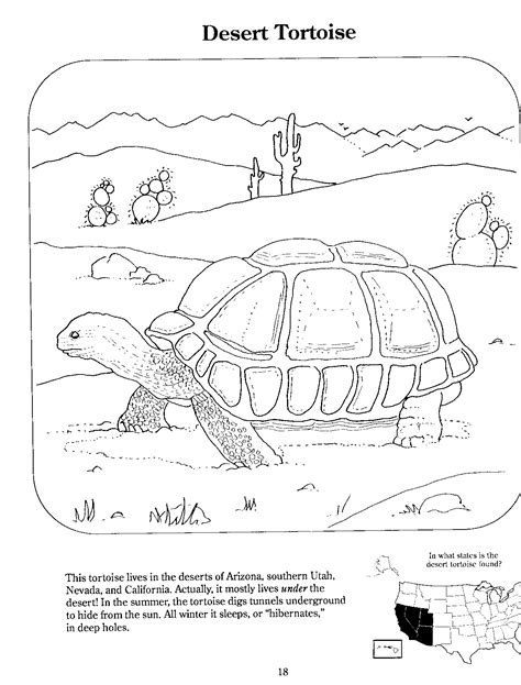 underground animals coloring page clever design underground animals coloring pages artsybarksy