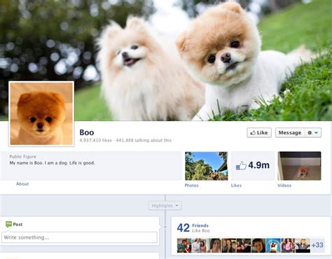 booyoutube all videos page 460 all about the pomeranian boo the world s cutest dog