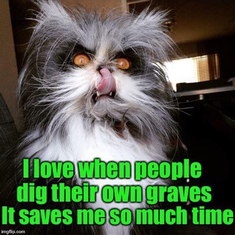 Crazy Cat Meme - grumpy cat may be grumpy but evil cat is downright