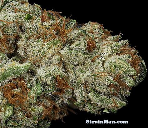 Top Shelf Kush by 44 Best Images About Dankness Retired On