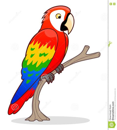 cartoon cockatiel cartoon ara parrot stock vector illustration of cute