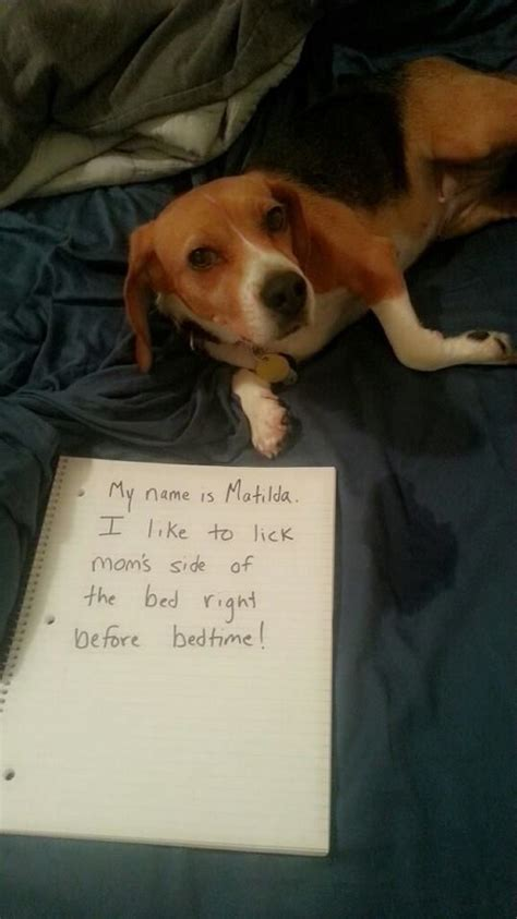 my dog licks the couch its always the o jays and night on pinterest