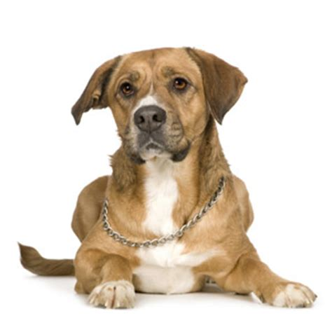 what to give puppy for upset stomach what to give dogs for upset stomach pets world