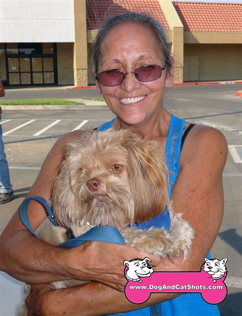 havanese northern california low cost and cat in northern california einstein the havanese came to our