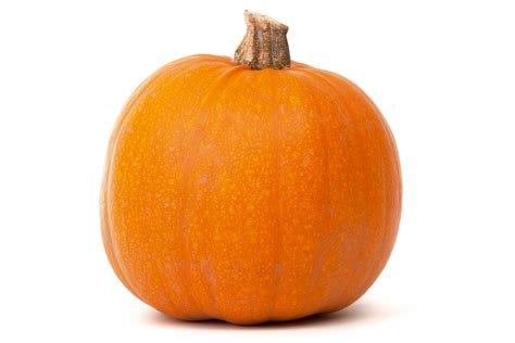 pumpkin isolated free stock photo domain pictures - Image Of Pumpkin