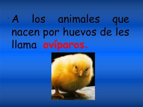 imagenes de animales que nacen del huevo el reino animal