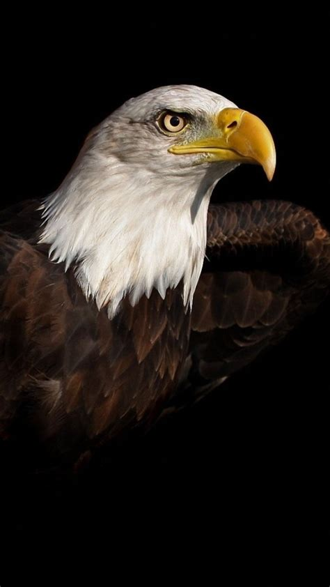 wallpaper iphone eagle bald eagle iphone 6 6 plus and iphone 5 4 wallpapers