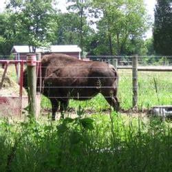 backyard bison backyard bison mercati ortofrutticoli 685 crowthers rd
