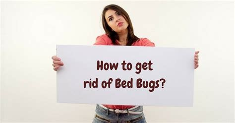 rid  bed bugs   effective  brou blog
