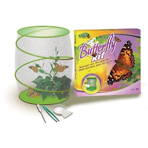 17 best images about live butterfly kits on pinterest