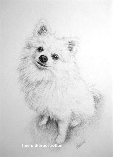 pomeranian drawing pomeranian drawing by leontinevanvliet on deviantart
