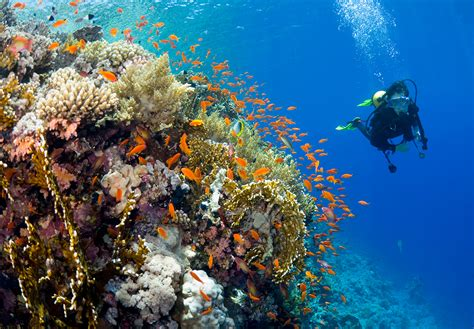 dive in resort scuba diving in vallarta garza blanca preserve