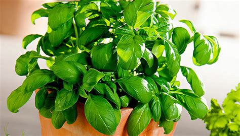 10 plants that don t need sunlight to grow v 228 xter 10 plants that don t require soil to grow the singapore
