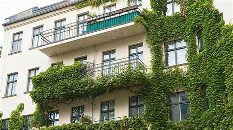 kletterpflanzen für pergola rankpflanzen f 195 188 r balkon home design gallery www appnow us