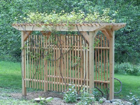 grape trellis gardening