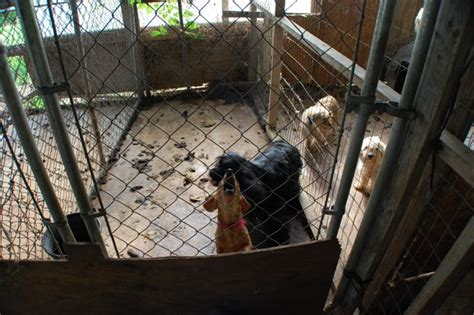 puppy mills in ga puppy mill busted owner surrenders dozens of dogs