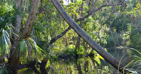 apalachicola river boat tours a prosperous past enriches the present in apalachicola