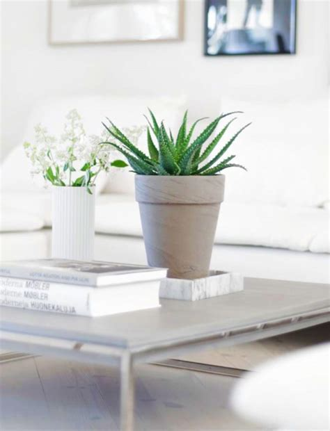 easy to take care of indoor plants indoor plants easy to take care of jardiner 205 a estepona