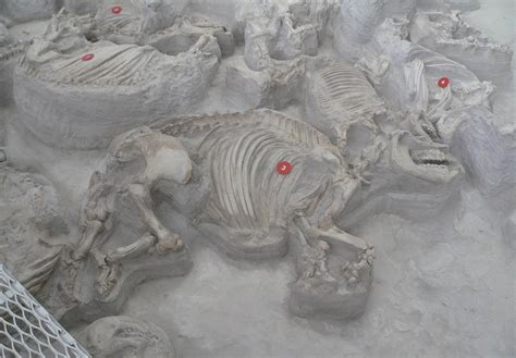ashfall fossil beds 30 most impressive fossil sites in north america top