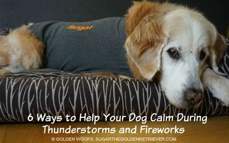 how to comfort a dog during thunderstorms best 25 dogs and fireworks ideas on pinterest dogs and