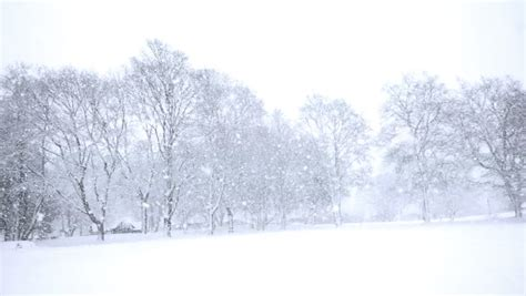picture of snow snow covered tree stock footage video shutterstock