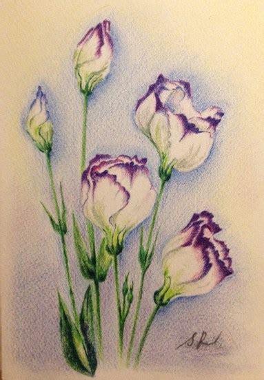 easy colored pencil drawings color pencil violet gallery page 3