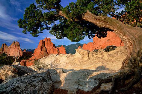 Garden Of The Gods Garden Garden Of The Gods Colorado Photograph