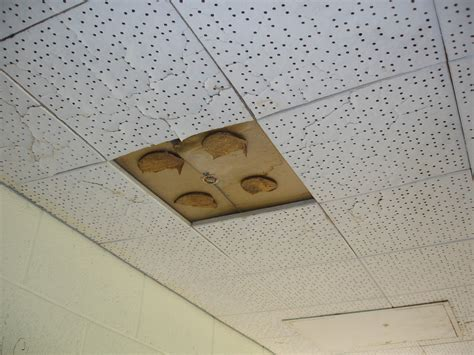 Asbestos Roof Tile Testing - identify asbestos ceiling tiles charter home ideas