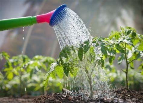 imagenes de flores sobre el agua 191 qu 233 ocurre al regar las plantas con agua caliente