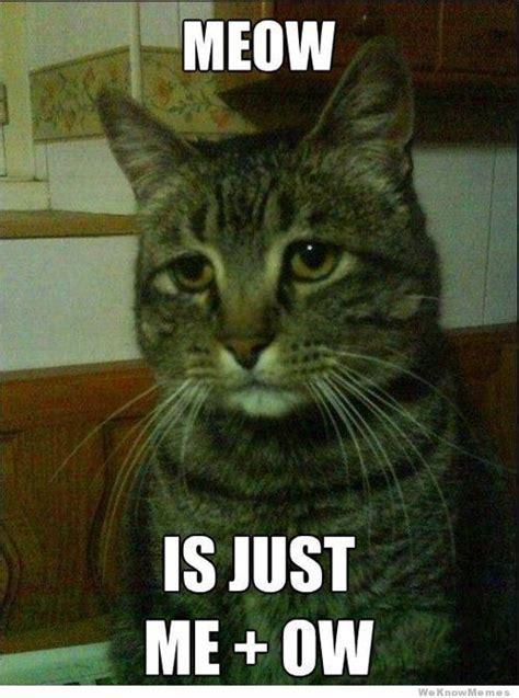 Cat Meow Meme - depressed cat weknowmemes