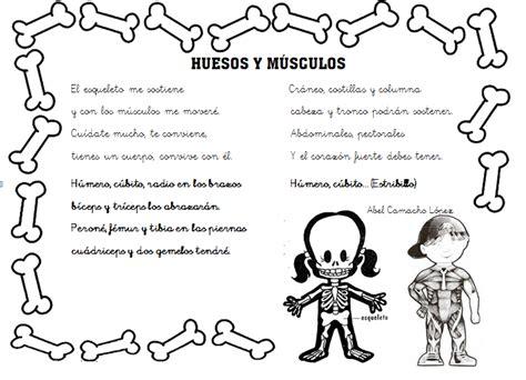 imagenes infantiles huesos los musculo del cuerpo humano para ni 241 o para colorear