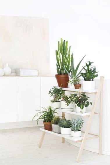 Plante De Cuisine by Des Plantes Pour D 233 Corer Une Cuisine Blanche