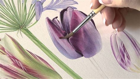 billy showells botanical painting 1844484513 how to paint queen of the night tulips in watercolour by billy showell youtube