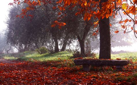 wallpaper sunlight trees landscape forest fall