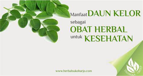 Sari Daun Kelor Instan 250gr informasi artikel seputar manfaat tanaman daun kelor untuk