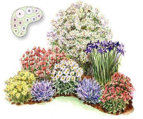 piante fiorite ricanti piante perenni liriope muscari piante perenni