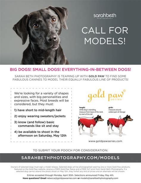 A Call For Model Pets by Call For Models Minnesota Commercial Photography