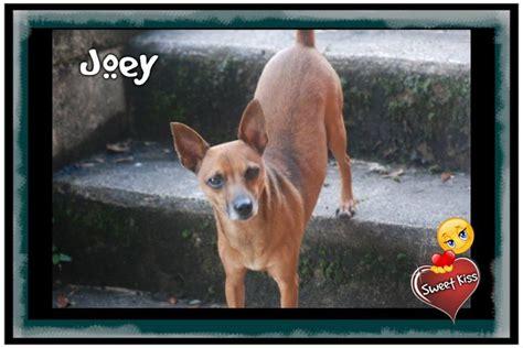 doodlebug joey wednesday s pet is joey southern maryland news net