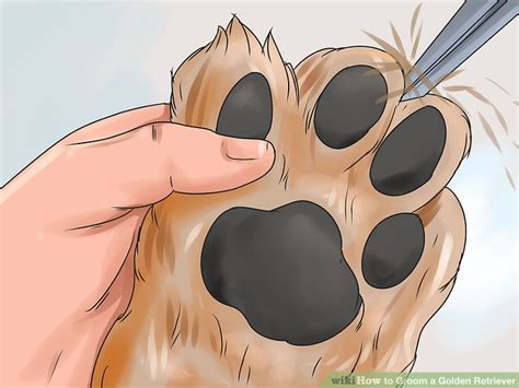 how to trim a golden retriever with clippers how to groom a golden retriever 14 steps with pictures