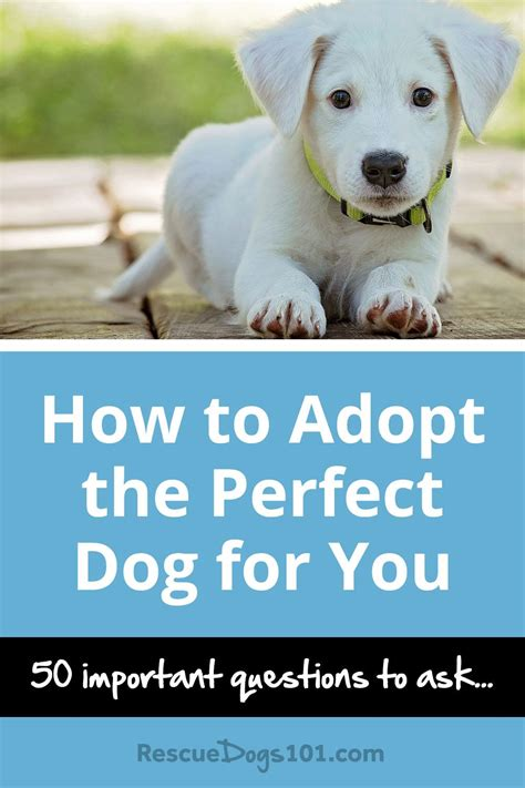 how to crate an adopted how to choose and adopt the for you rescue dogs 101