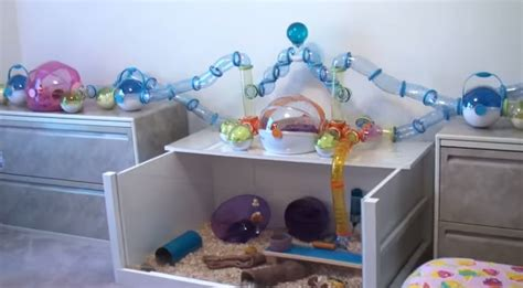 hoppinghammy room tour all hamster are invited to a hamster room tour boomsbeat
