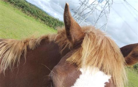 glasgow hairdresser hacked horse hairdresser to the rescue after bizarre attack