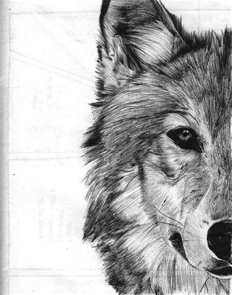 best 25 wolf range ideas on pinterest wolf oven wolf werewolf sketches drawings best 25 wolf face drawing ideas