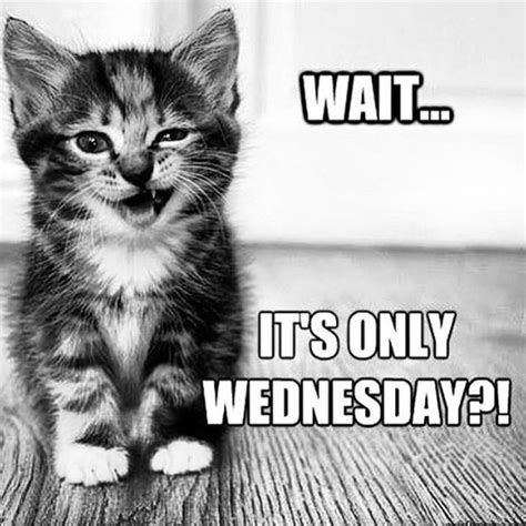Funny Memes About Wednesday - 15 wednesday memes funny hump day memes with quotes 2018