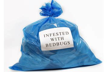 how to get bed bugs out of clothes how to get rid of bed bugs washing clothes howsto co