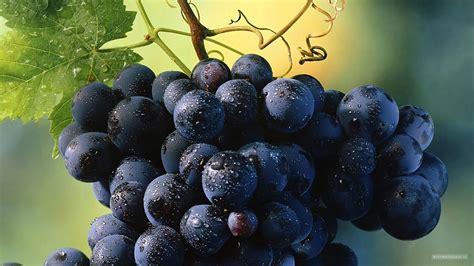 imagenes uvas moradas fondos de pantalla de uvas moradas fuerte tama 241 o 640x480
