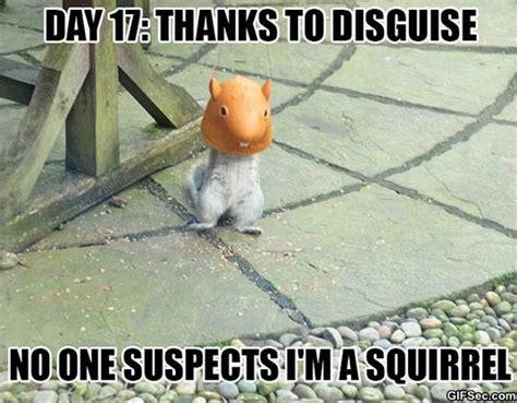 Funny Squirrel Memes - cheer up quotes squirrel quotesgram